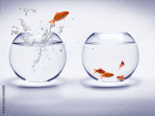 Leinwandbild Motiv poisson rouge dans un aquarium