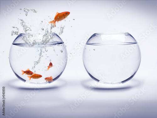akwarium rogów poissons