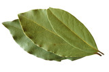 dried bay leaves poster