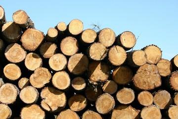troncs d'arbres empilés