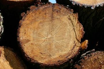 tronc d'arbres