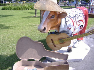 busking cow