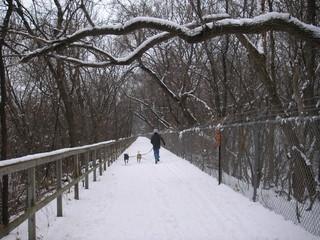 snowy winter in minnesota