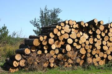 pile de troncs d'arbres