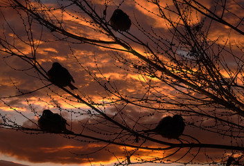 sparrows and sunset