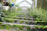 mossy stairs poster