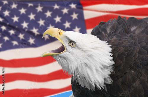 eagle kompozytowych