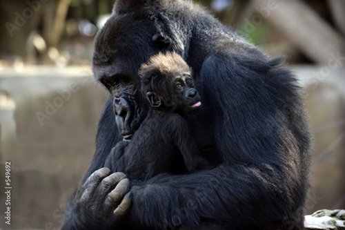 Foto op Canvas Aap mother & child
