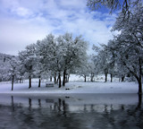 winter park scene reflected in water poster