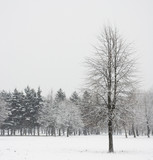 lonely tree in winter forest poster