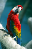 parrot on a rope poster