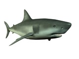 requin shark 3d
