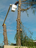 tree trimmer poster
