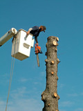 tree removal, people working poster