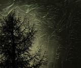 mystic tree poster