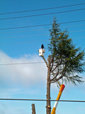tree removal, danger poster