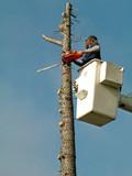 tree removal, danger, poster