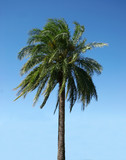 palmtree on a clear day poster