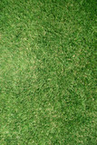 real grass lawn texture poster