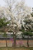 garden in bloom poster