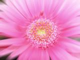 daisy blur poster
