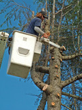 man working, tree, trimmer poster