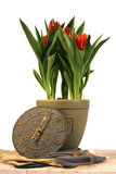tulips in a pot poster