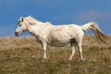 pregnant pony poster