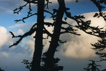 shadow-figure in trees