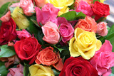 Kolorowe róże - 568421