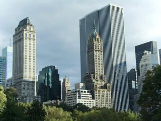 city treetops
