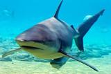 Fototapete Tauchend - Fisch - Fische