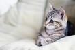 roleta: cat 2