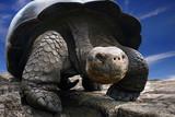 Fototapete Gigabyte - Natur - Reptilien / Amphibien
