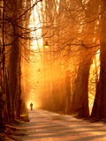 gold walker