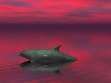 sunset dolphin poster