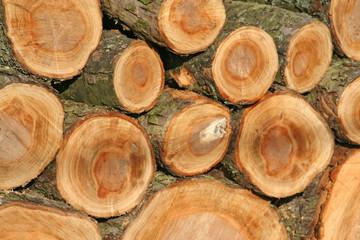 feuerholz,gesägt