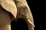 elephant fond noir poster