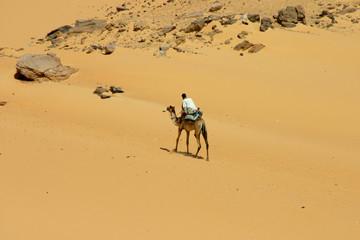 chameau en solo