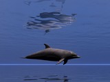 undersea dolphin 2 poster