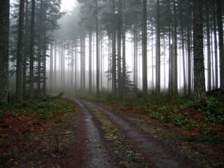 gravel road into the fog