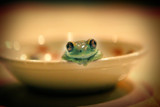 bowl of frog poster