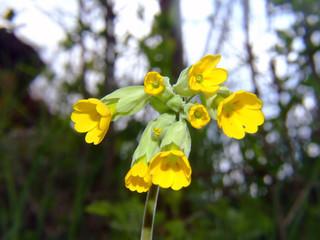 yellow meadow flower