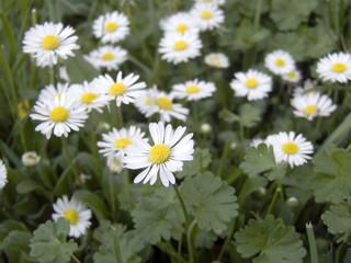 many meadow flowers