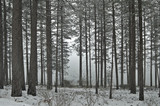 snowy forest in winter poster