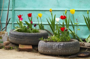 tyres and flowers