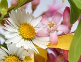 composition florale poster