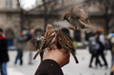 france, paris: notre dame in winter, feeding the sparrows poster