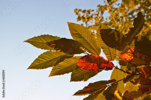 leaves on a tree
