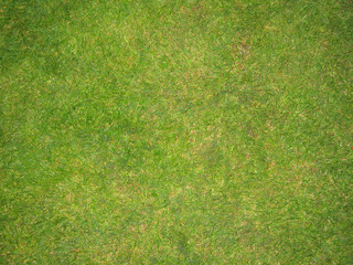 green grass football pitch texture in england
